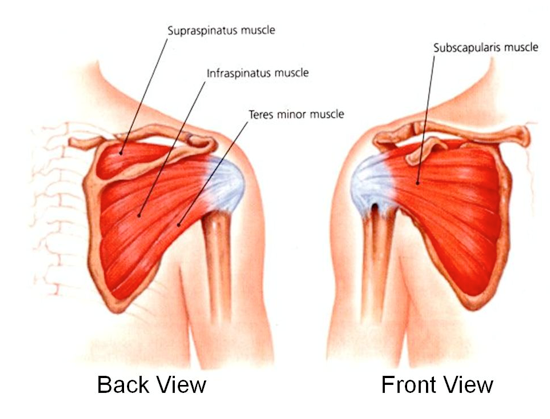 The Rotator Cuff – What Is It And Why Is It So Important??
